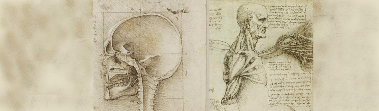 Leonardo ed i suoi studi anatomici. Un'iconografia che affascina